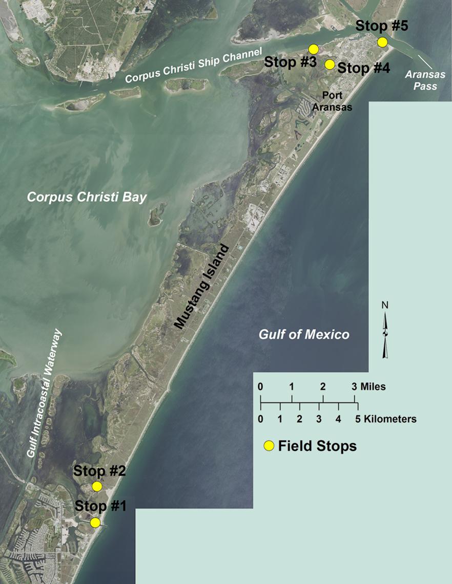 Mustang Island Field Guide