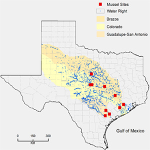 Potential Economic Impacts of Environmental Flows Following a Possible Listing of Endangered Texas Freshwater Mussels