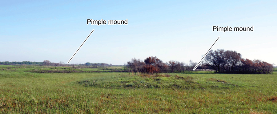 Pimple mounds on sandy Ingleside barrier system deposits on Powderhorn Ranch.